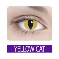 Crazy yellow cat