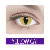Crazy yellow cat